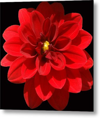 In Bloom Metal Print by Kat Dee