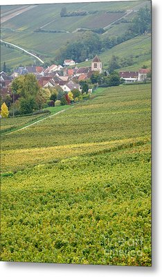 In Champagne Metal Print by Olivier Le Queinec
