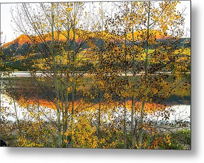 Metal Print featuring the photograph In Early Morning Light by Tim Reaves