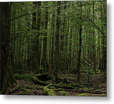 Metal Print featuring the photograph In Fangorn Forest by Odille Esmonde-Morgan