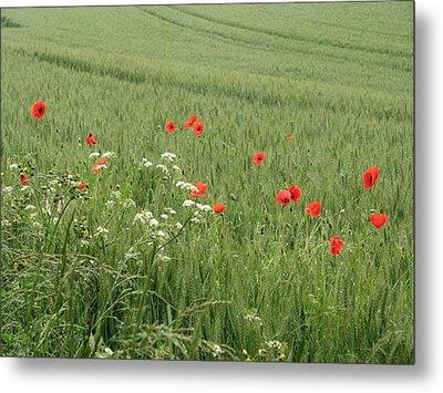 in Flanders Fields the  poppies blow Metal Print