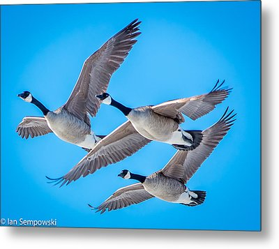 In Formation Metal Print