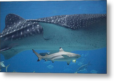 In Good Company Metal Print by Betsy Knapp