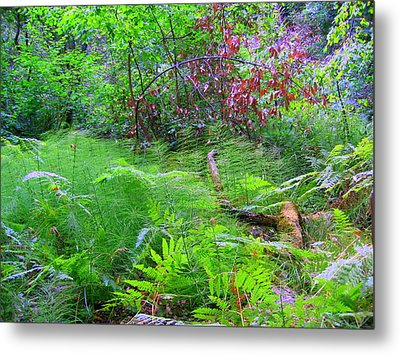 Metal Print featuring the photograph In Muir Woods A Fallen Tree Surrenders To The Forest Ferns by Don Struke