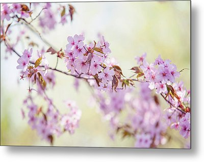 Metal Print featuring the photograph In Tender Bloom. Spring Watercolors by Jenny Rainbow