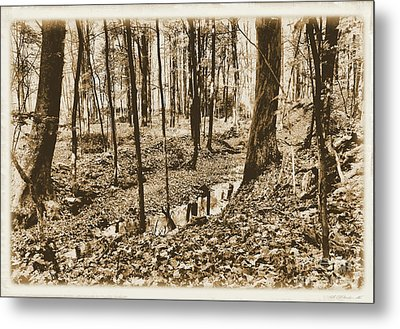 In The Backwoods Metal Print by Matthew Winn