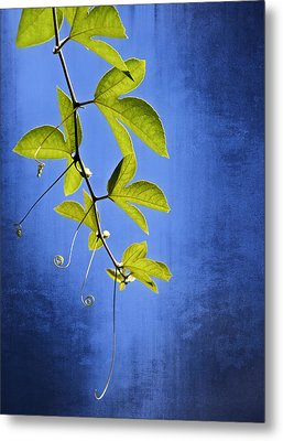 Metal Print featuring the photograph In The Blue by Carolyn Marshall