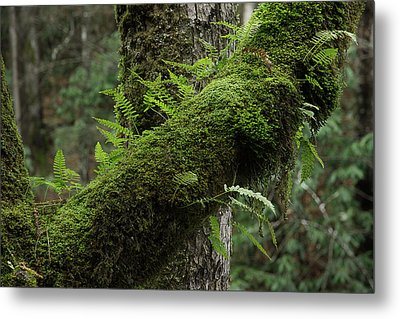 Metal Print featuring the photograph In The Cool Of The Forest by Mike Eingle