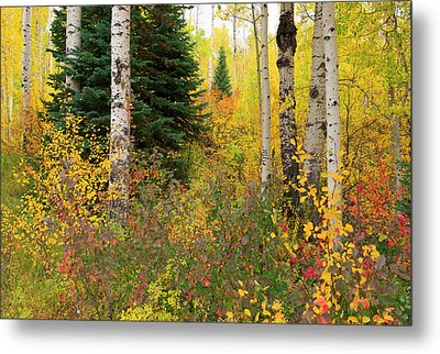 Metal Print featuring the photograph In The Depths Of Autumn Woods by Tim Reaves