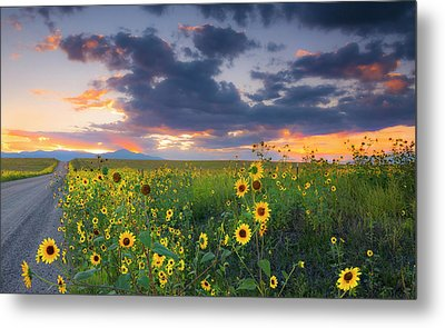 Metal Print featuring the photograph In The Evening Light by Tim Reaves