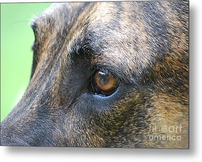 In The Eyes Of A Dog Metal Print by Lila Fisher-Wenzel