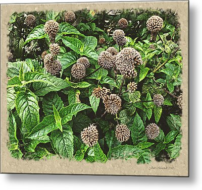 Metal Print featuring the photograph In The Highline Garden by Joan  Minchak