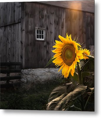 In The Light Metal Print