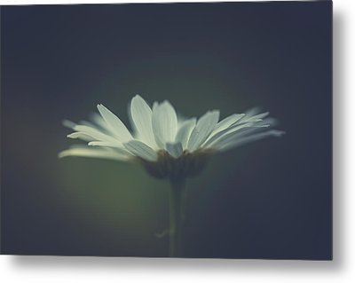Metal Print featuring the photograph In The Light by Shane Holsclaw