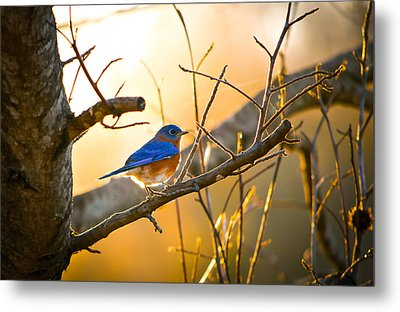 In The Light Metal Print by Shelby  Young