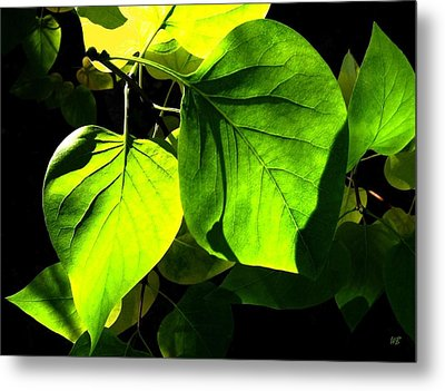 In The Limelight Metal Print by Will Borden