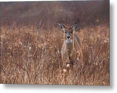 Metal Print featuring the photograph In The Meadow by Robin-lee Vieira