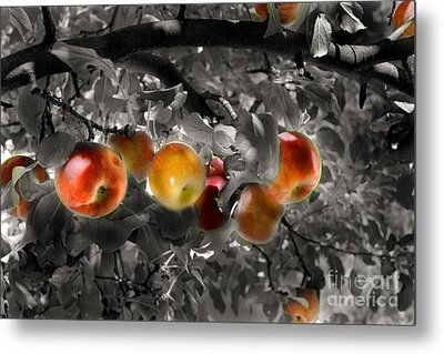 In The Orchard Of The Artists Metal Print by William Fields