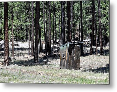 In The Pines Metal Print