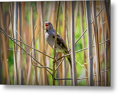 In The Reeds Metal Print