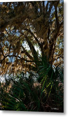 In The Shade Of A Florida Oak Metal Print by Christopher Holmes