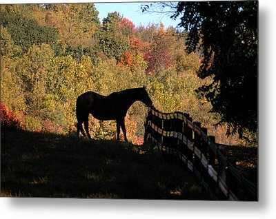 In The Shadow Metal Print by William A Lopez