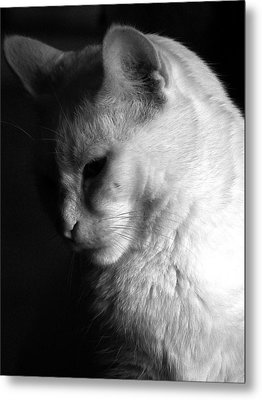 In The Shadows Metal Print by Bob Orsillo