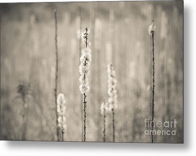 In The Wild Grass Metal Print