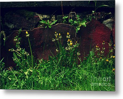 Metal Print featuring the photograph In The Wild by Kristine Nora