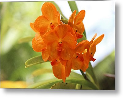 Metal Print featuring the photograph In This World by Michiale Schneider