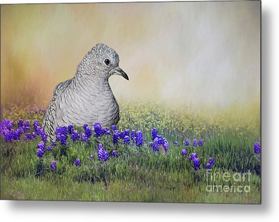 Metal Print featuring the photograph Inca Dove  by Bonnie Barry