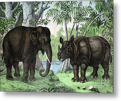 Indian Elephant And Rhinoceros Metal Print by Biodiversity Heritage Library