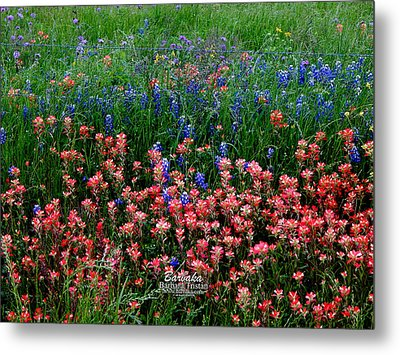 Metal Print featuring the photograph Indian Paintbrush #0486 by Barbara Tristan