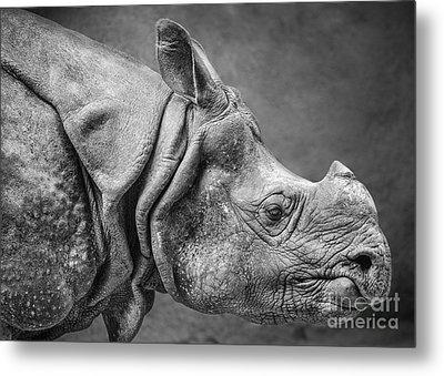 Indian Rhino Profile Metal Print by Jamie Pham