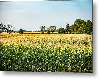 Indiana Corn Field Metal Print
