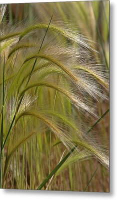 Indiangrass Swaying Softly With The Wind Metal Print by Christine Till