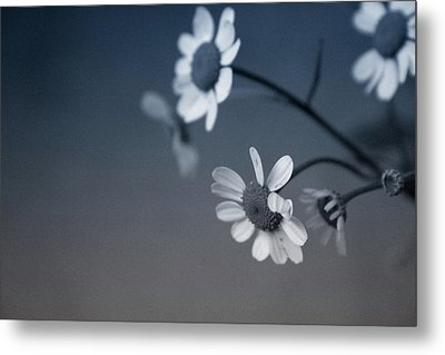 Indigo Daisies 2- Art By Linda Woods Metal Print by Linda Woods