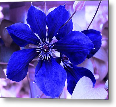 Metal Print featuring the photograph Indigo Flower by Milena Ilieva