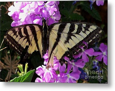 Metal Print featuring the photograph Injured Swallowtail by Erica Hanel