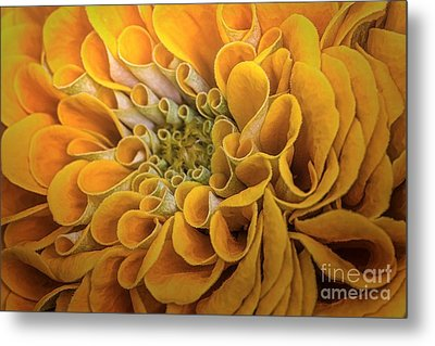 Inner Beauty Metal Print by Mary Lou Chmura