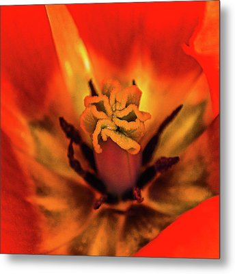 Inner Floral Macro Abstract Metal Print by Julie Palencia