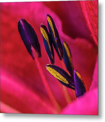 Inner Lily Macro Two Metal Print by Julie Palencia