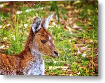 Inner Peace, Yanchep National Park Metal Print