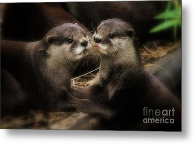 Innocence Metal Print by Kym Clarke