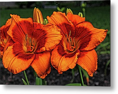 Metal Print featuring the photograph Innocent Fire by Judy Vincent