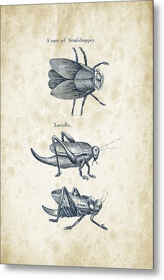 Insects - 1792 - 08 Metal Print