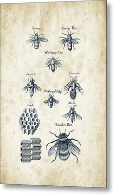 Insects - 1792 - 14 Metal Print