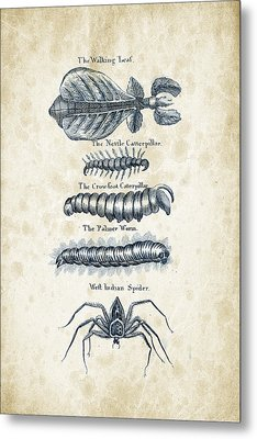 Insects - 1792 - 17 Metal Print by Aged Pixel