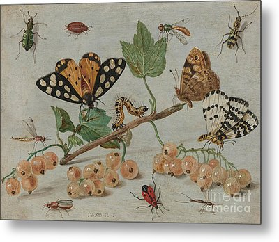 Insects And Fruit, Metal Print