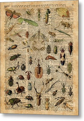 Insects Bugs Flies Vintage Illustration Dictionary Art Metal Print by Jacob Kuch